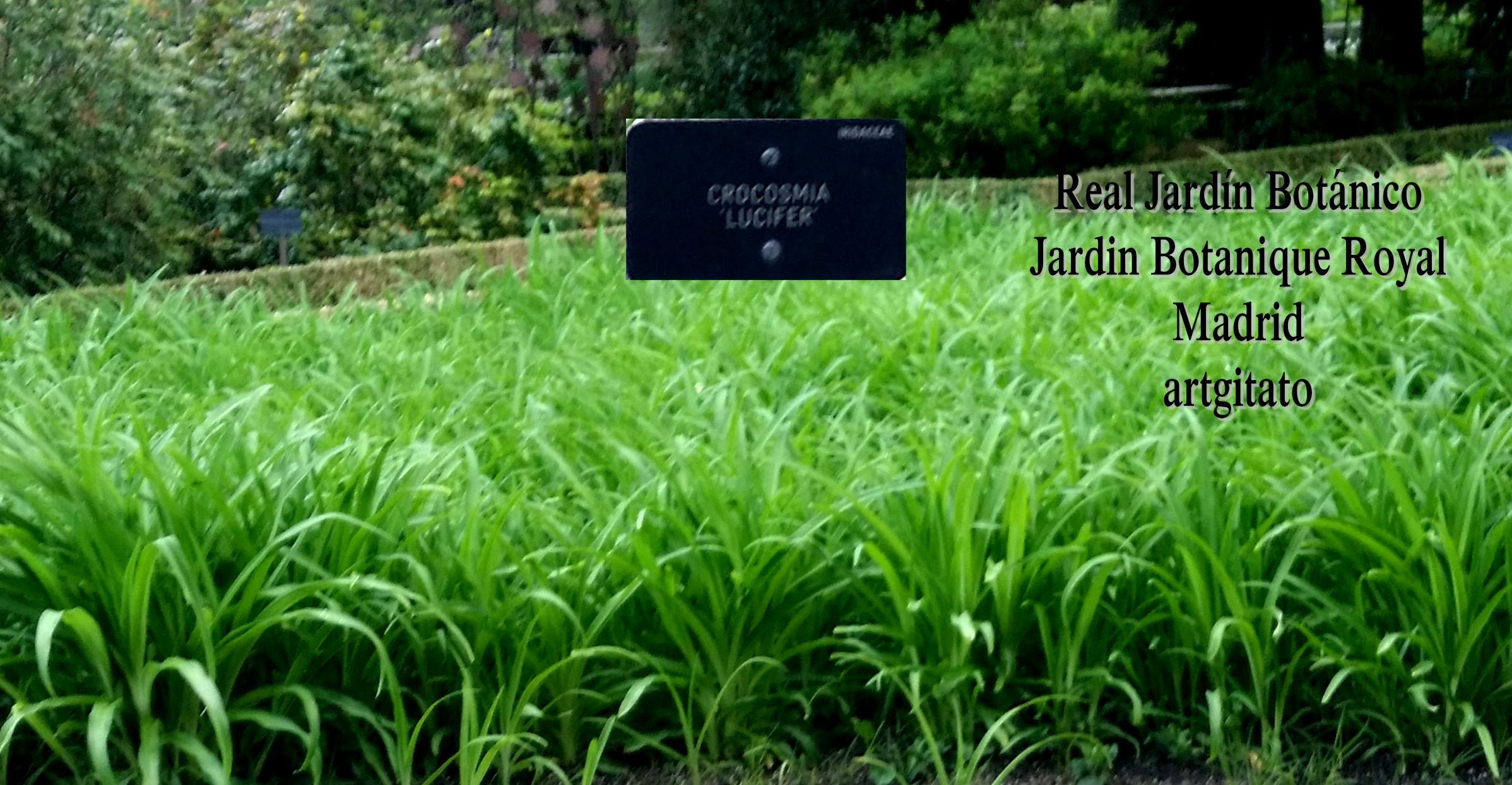 Real jard n bot nico de madrid 1781 le jardin botanique for Jardin royal