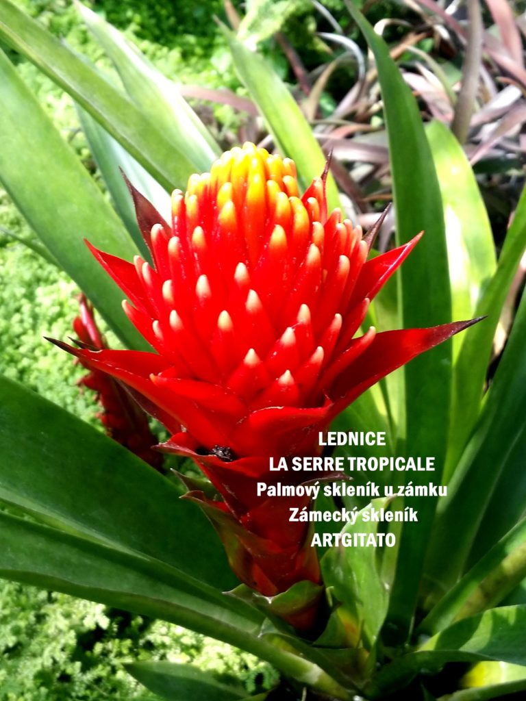 LEDNICE LA SERRE TROPICALE - Palmový skleník u zámku - Zámecký skleník Artgitato (10)