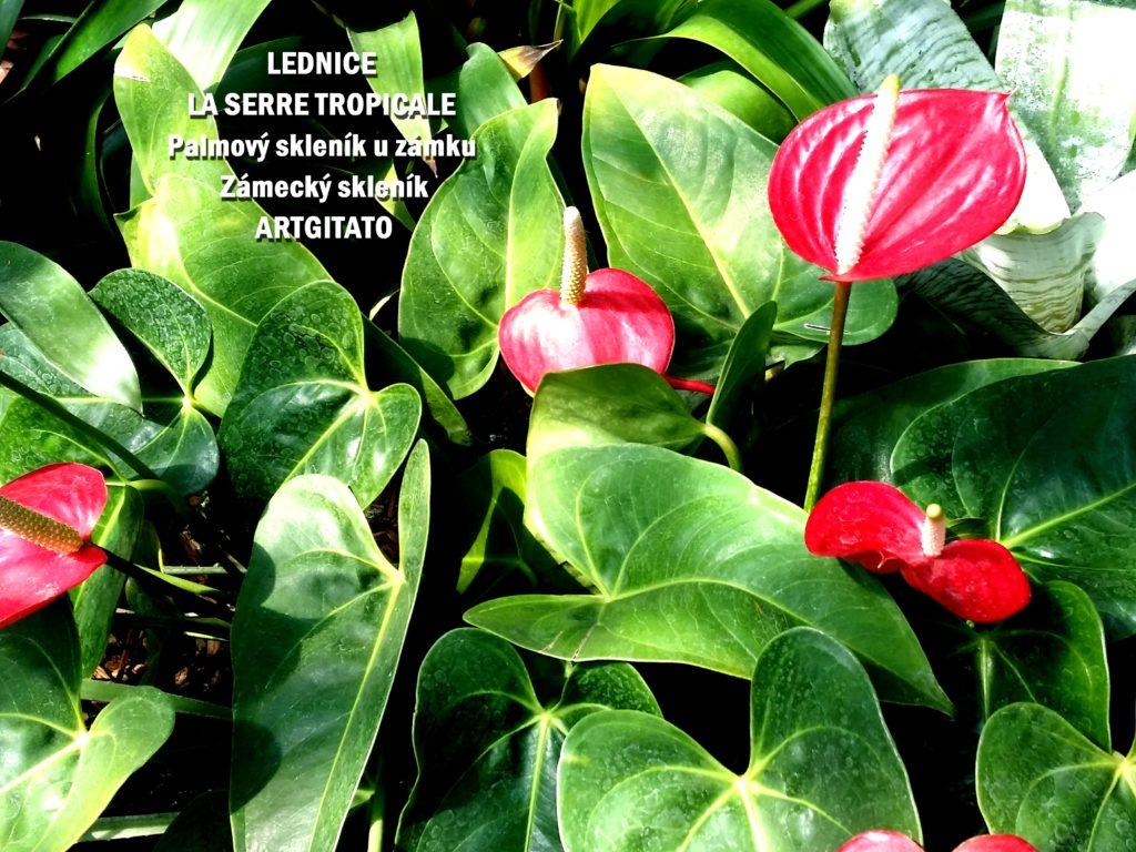 LEDNICE LA SERRE TROPICALE - Palmový skleník u zámku - Zámecký skleník Artgitato (11)