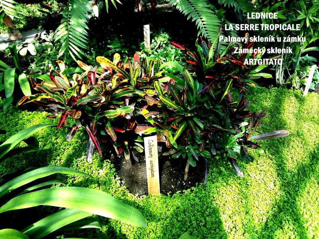 LEDNICE LA SERRE TROPICALE - Palmový skleník u zámku - Zámecký skleník Artgitato (12)