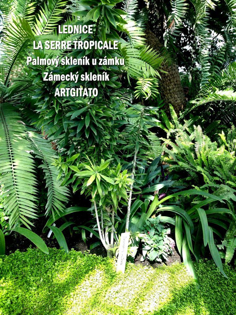 LEDNICE LA SERRE TROPICALE - Palmový skleník u zámku - Zámecký skleník Artgitato (13)