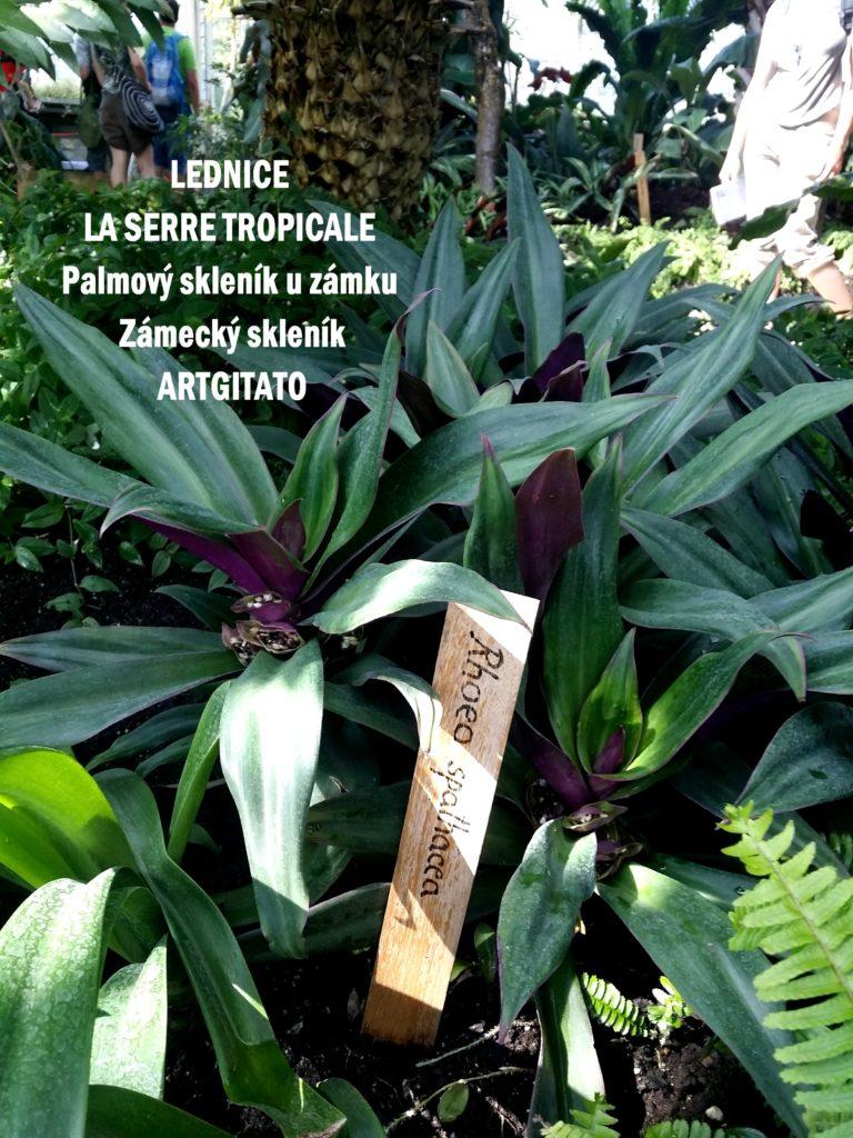 LEDNICE LA SERRE TROPICALE - Palmový skleník u zámku - Zámecký skleník Artgitato (14)