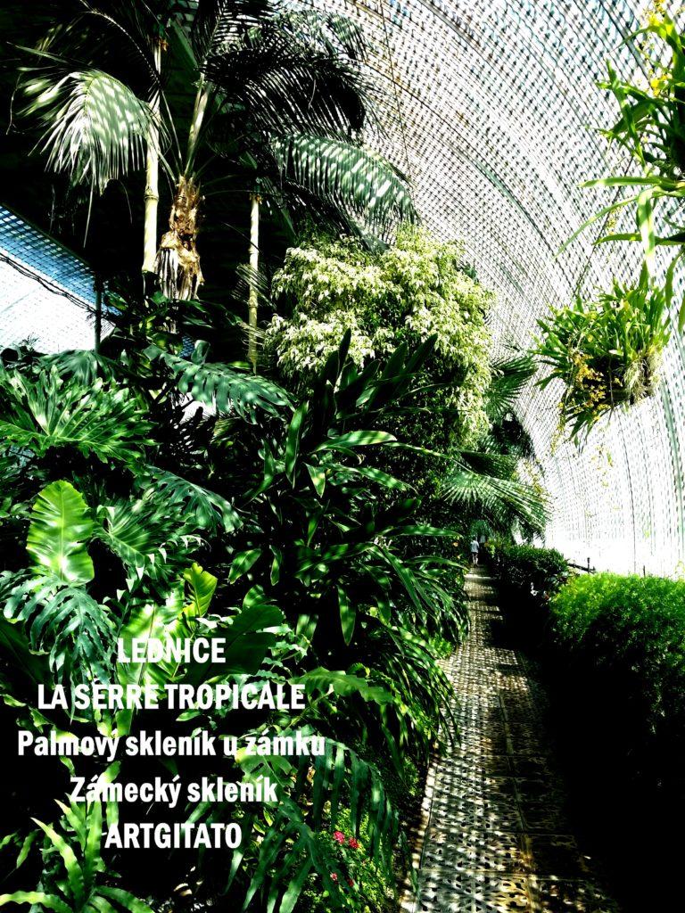 LEDNICE LA SERRE TROPICALE - Palmový skleník u zámku - Zámecký skleník Artgitato (15)