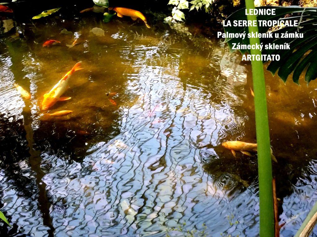 LEDNICE LA SERRE TROPICALE - Palmový skleník u zámku - Zámecký skleník Artgitato (16)