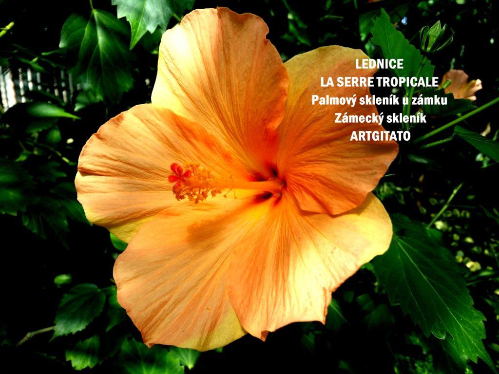 LEDNICE LA SERRE TROPICALE - Palmový skleník u zámku - Zámecký skleník Artgitato (17)