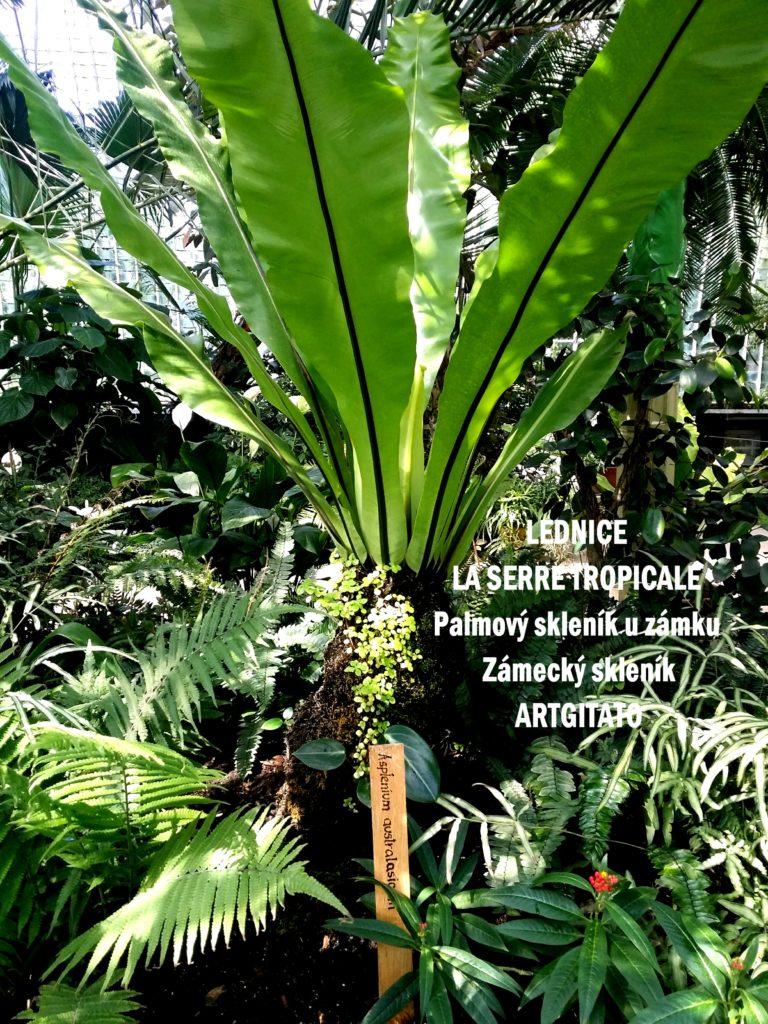 LEDNICE LA SERRE TROPICALE - Palmový skleník u zámku - Zámecký skleník Artgitato (18)