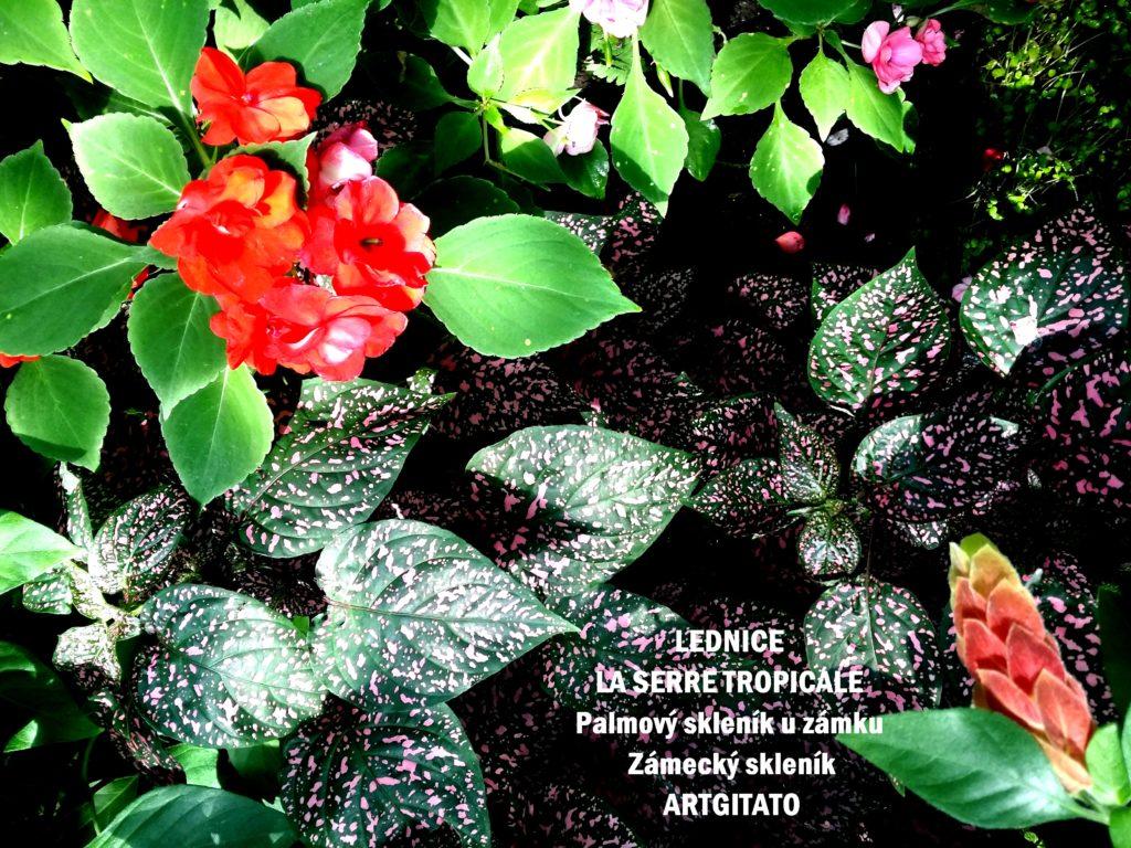 LEDNICE LA SERRE TROPICALE - Palmový skleník u zámku - Zámecký skleník Artgitato (19)