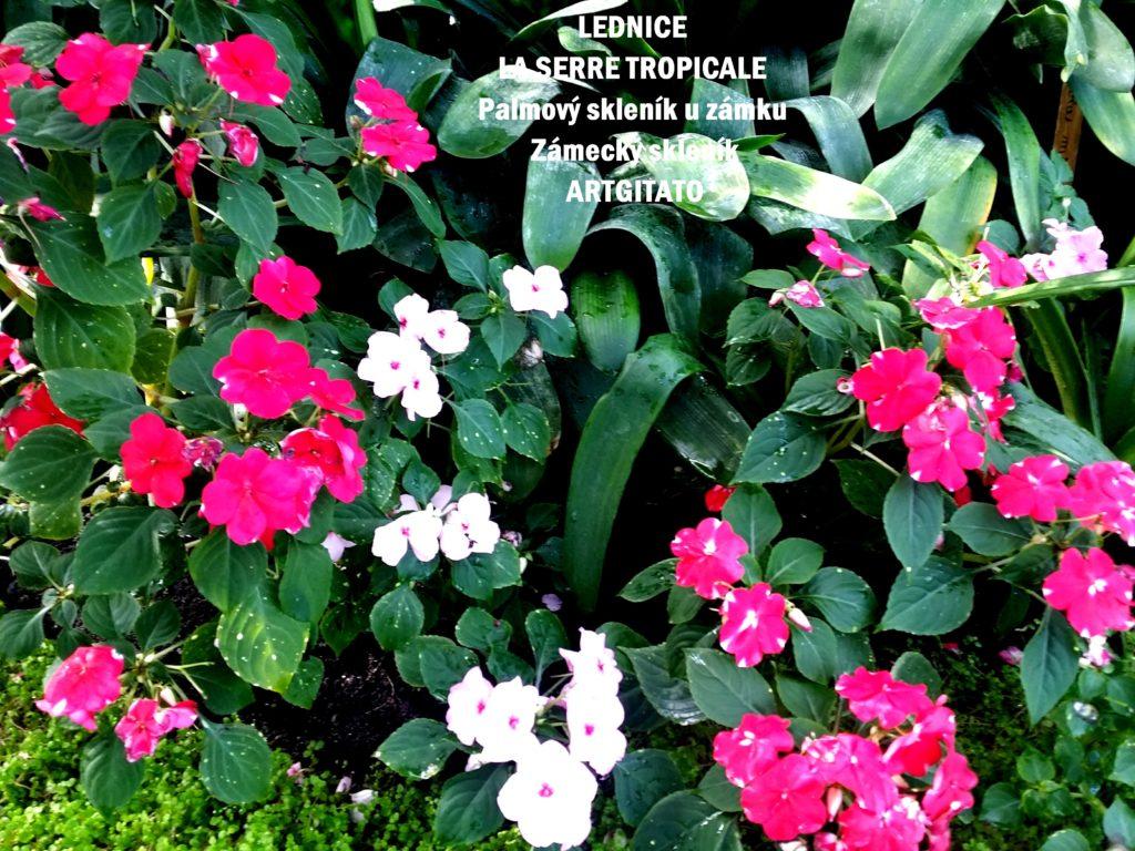 LEDNICE LA SERRE TROPICALE - Palmový skleník u zámku - Zámecký skleník Artgitato (20)