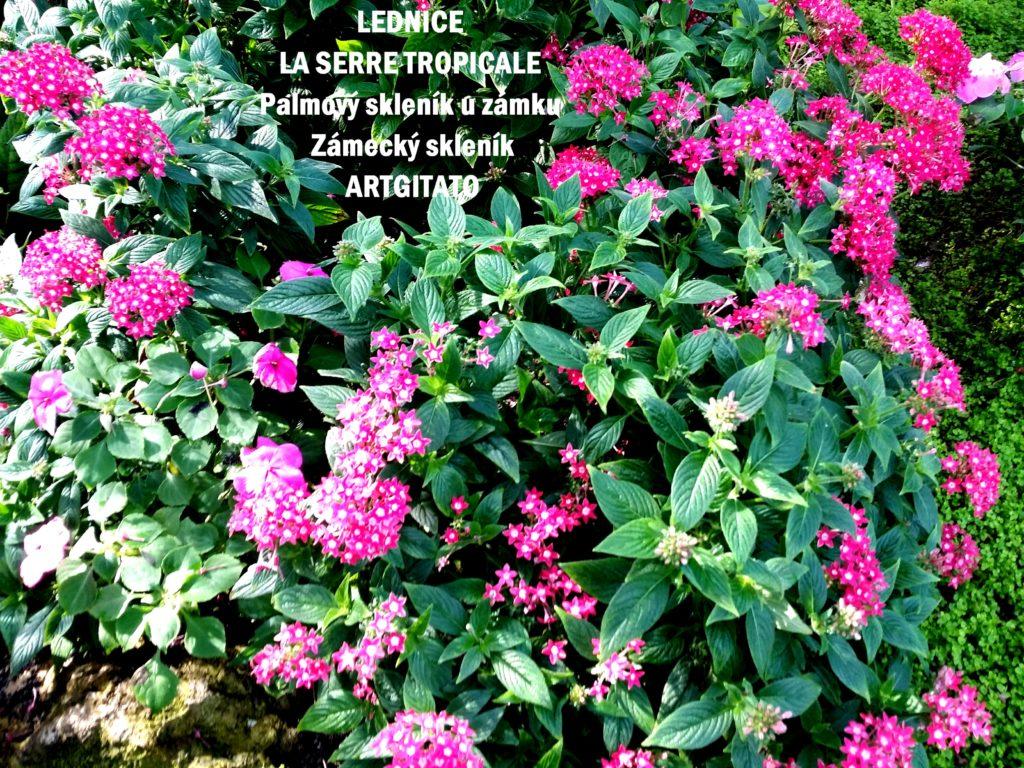 LEDNICE LA SERRE TROPICALE - Palmový skleník u zámku - Zámecký skleník Artgitato (21)