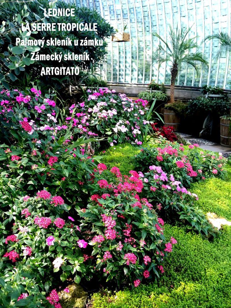 LEDNICE LA SERRE TROPICALE - Palmový skleník u zámku - Zámecký skleník Artgitato (22)