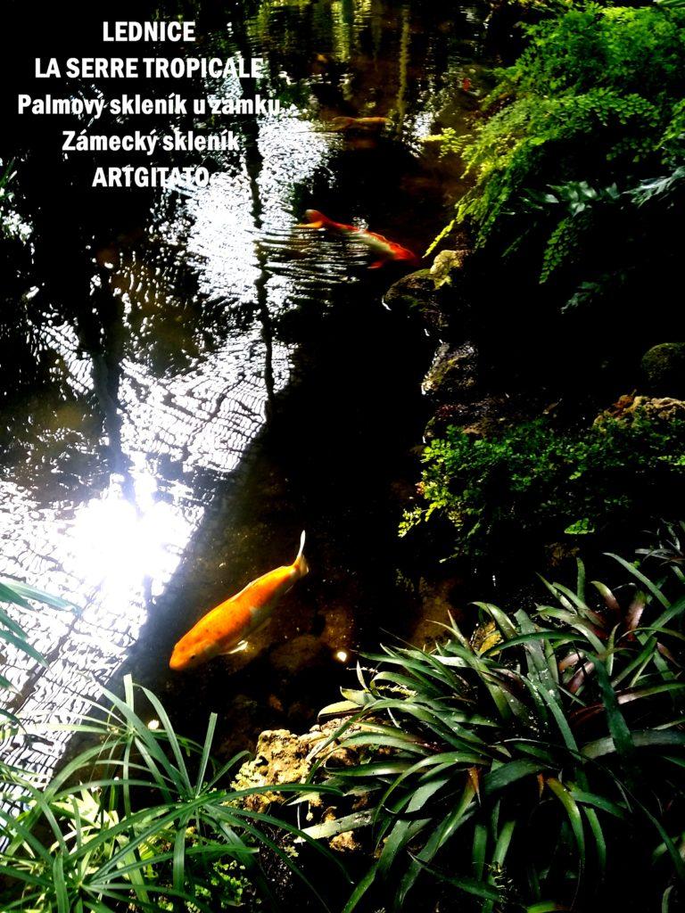 LEDNICE LA SERRE TROPICALE - Palmový skleník u zámku - Zámecký skleník Artgitato (25)