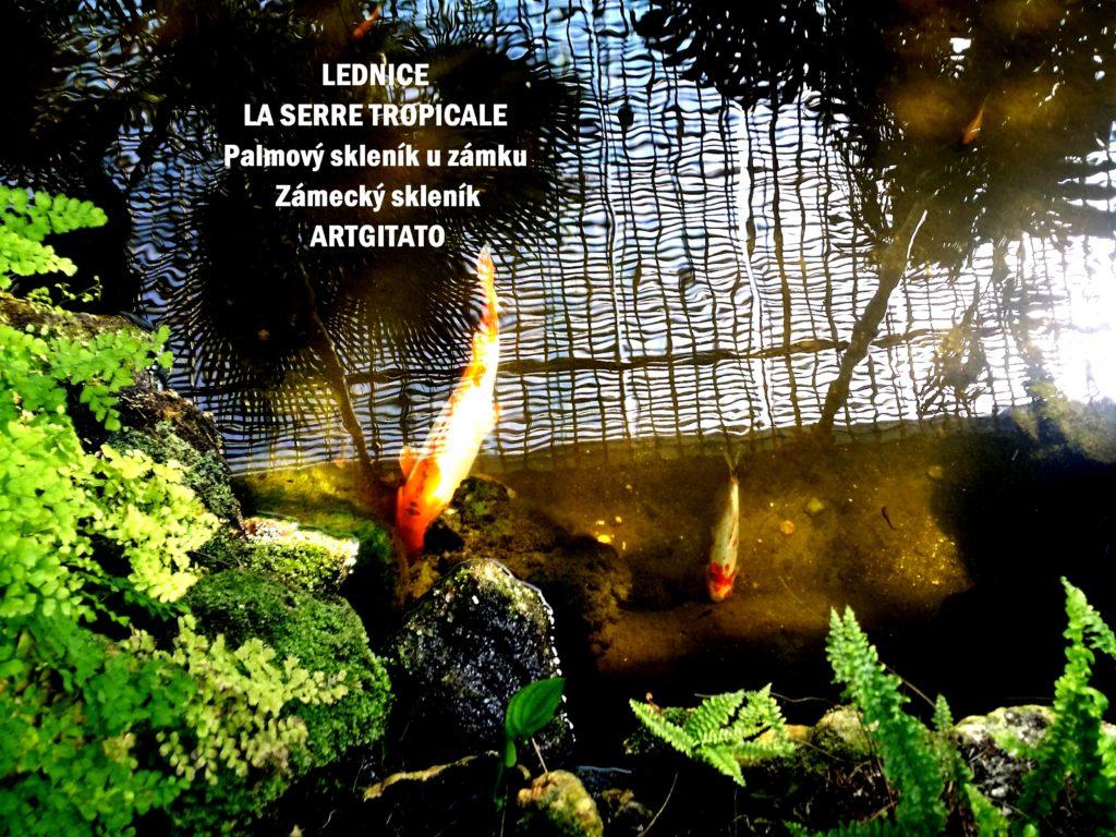 LEDNICE LA SERRE TROPICALE - Palmový skleník u zámku - Zámecký skleník Artgitato (26)