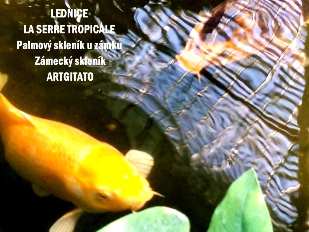 LEDNICE LA SERRE TROPICALE - Palmový skleník u zámku - Zámecký skleník Artgitato (27)