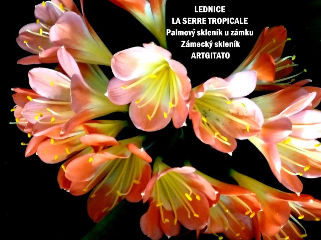 LEDNICE LA SERRE TROPICALE - Palmový skleník u zámku - Zámecký skleník Artgitato (28)