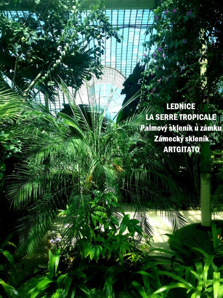 LEDNICE LA SERRE TROPICALE - Palmový skleník u zámku - Zámecký skleník Artgitato (3)
