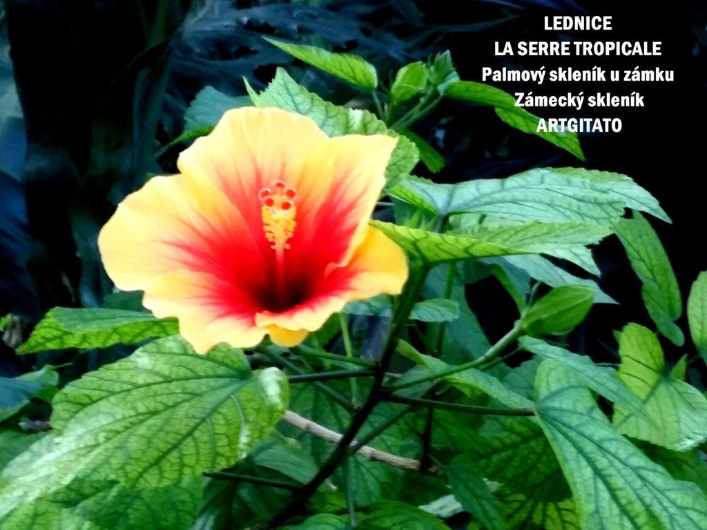 LEDNICE LA SERRE TROPICALE - Palmový skleník u zámku - Zámecký skleník Artgitato (30)