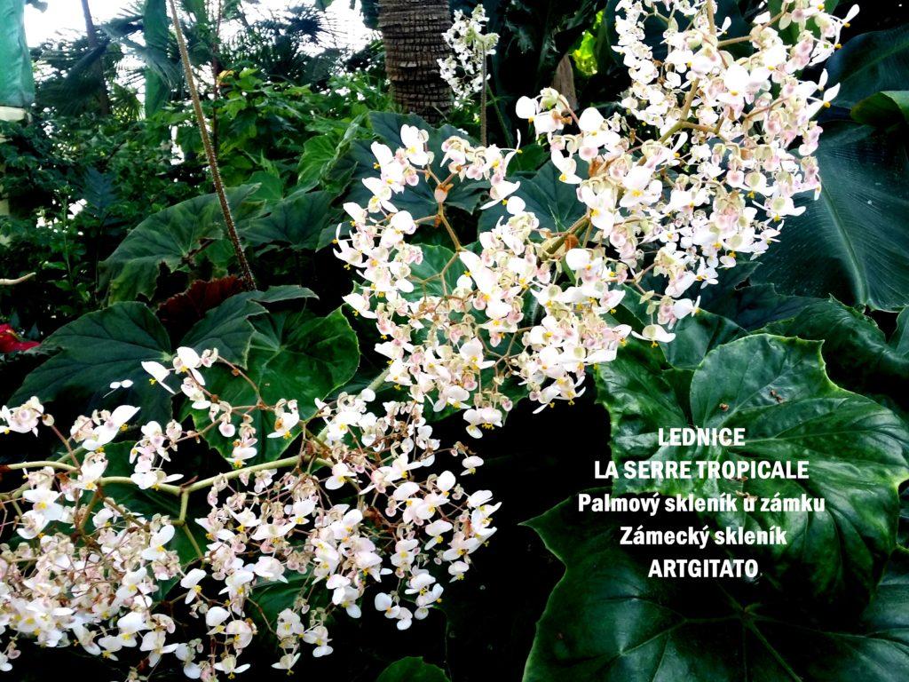 LEDNICE LA SERRE TROPICALE - Palmový skleník u zámku - Zámecký skleník Artgitato (32)