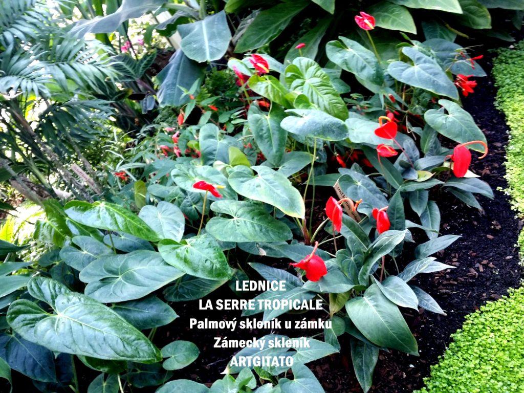 LEDNICE LA SERRE TROPICALE - Palmový skleník u zámku - Zámecký skleník Artgitato (33)