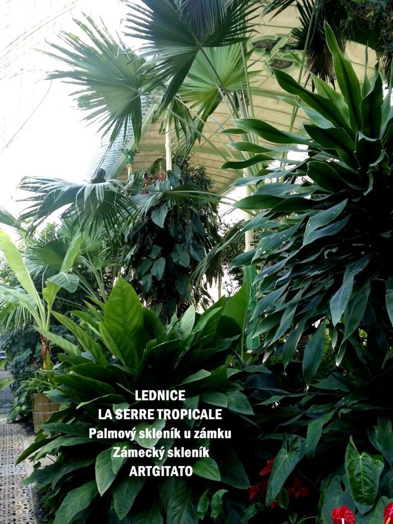 LEDNICE LA SERRE TROPICALE - Palmový skleník u zámku - Zámecký skleník Artgitato (34)