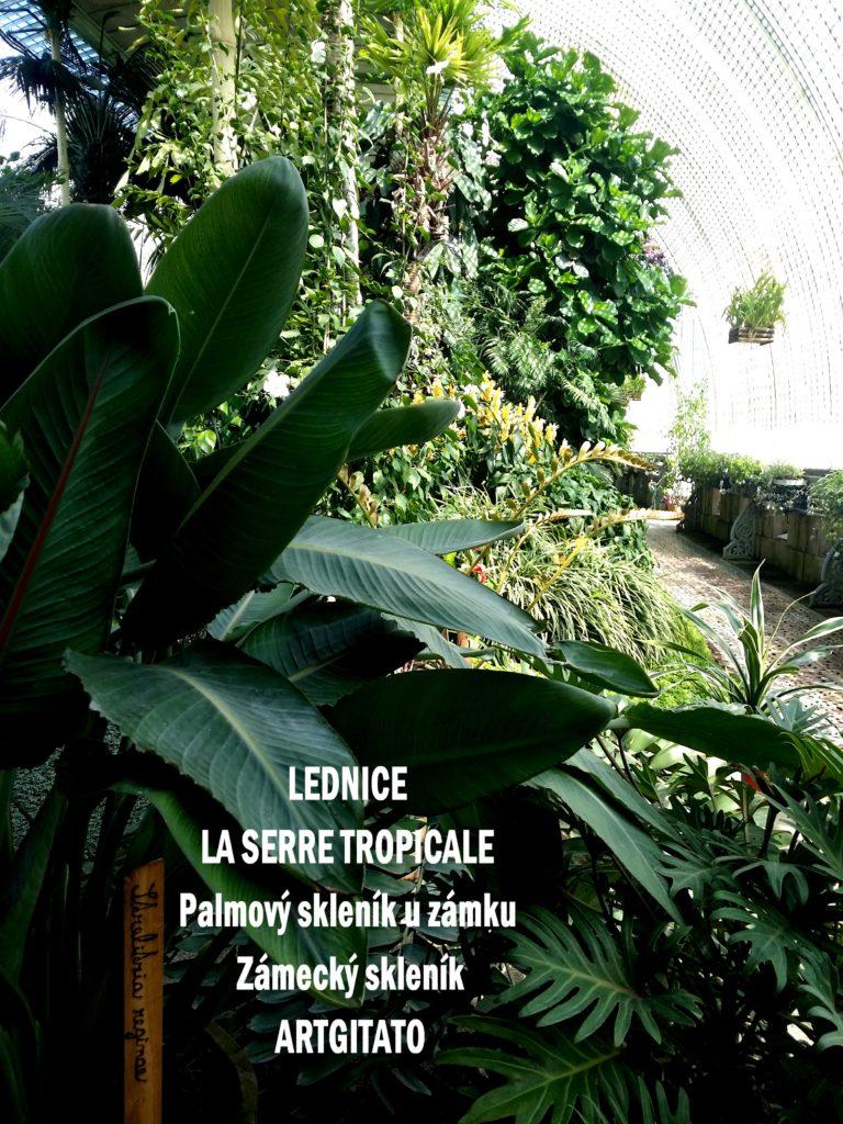 LEDNICE LA SERRE TROPICALE - Palmový skleník u zámku - Zámecký skleník Artgitato (6)