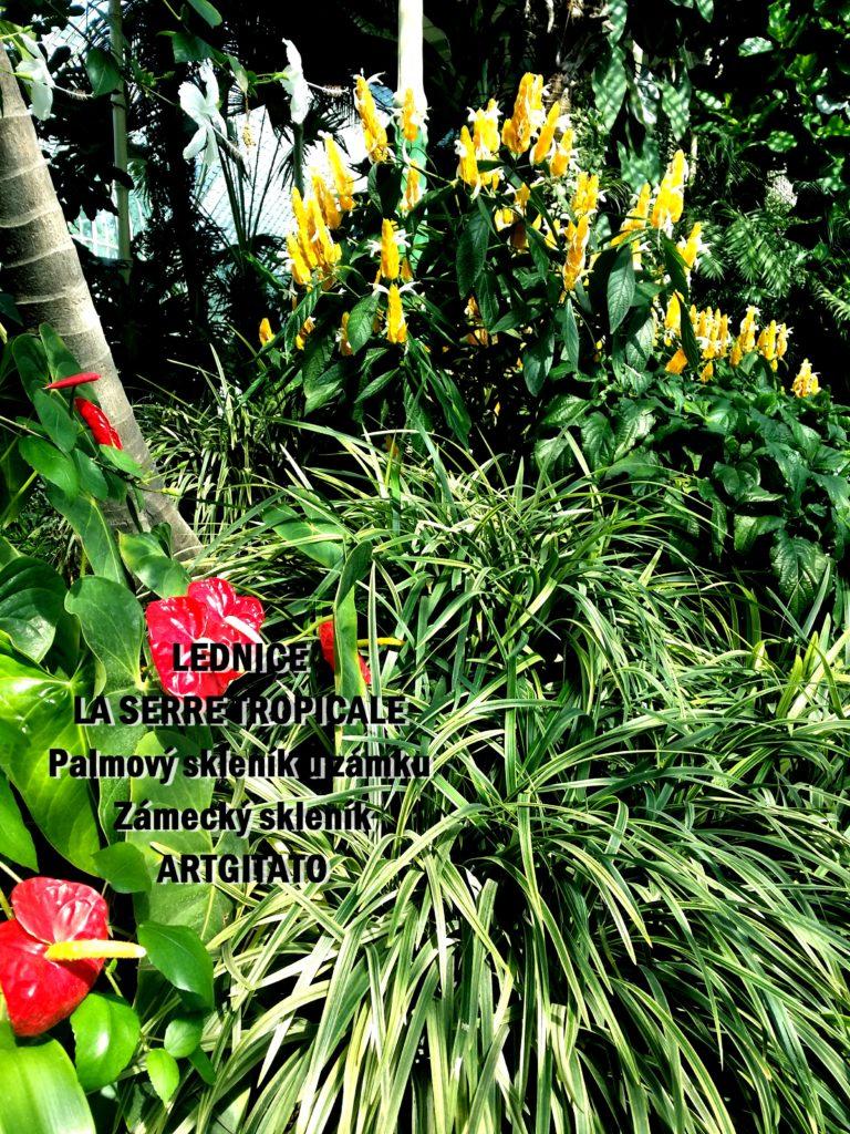 LEDNICE LA SERRE TROPICALE - Palmový skleník u zámku - Zámecký skleník Artgitato (7)
