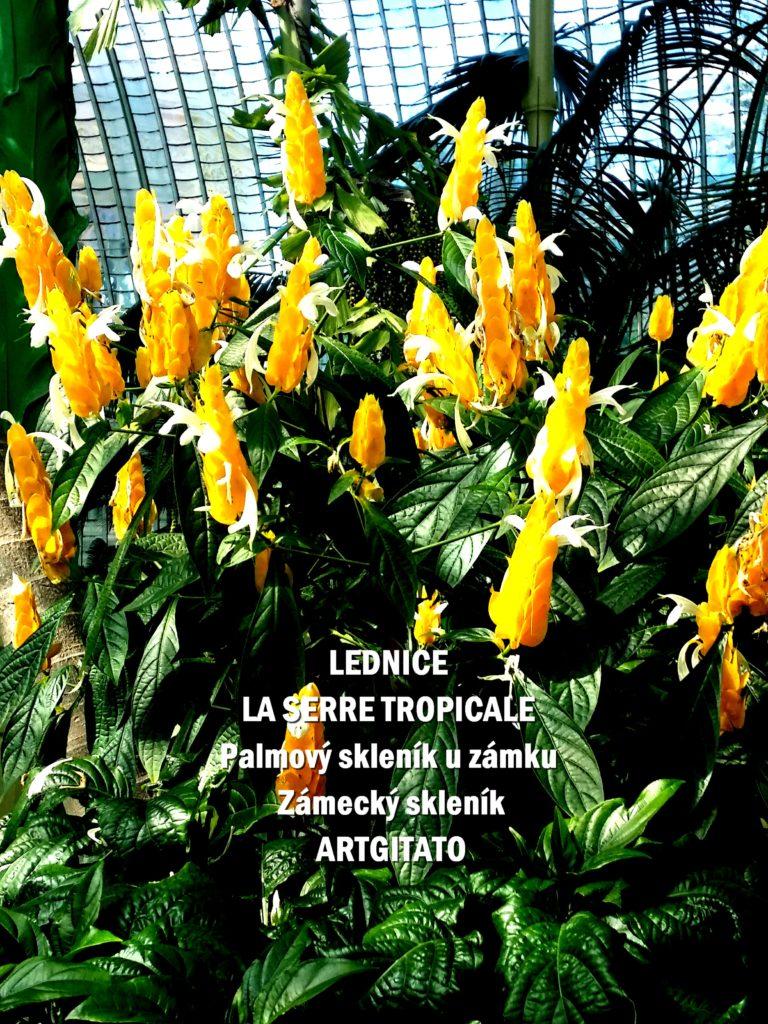 LEDNICE LA SERRE TROPICALE - Palmový skleník u zámku - Zámecký skleník Artgitato (8)