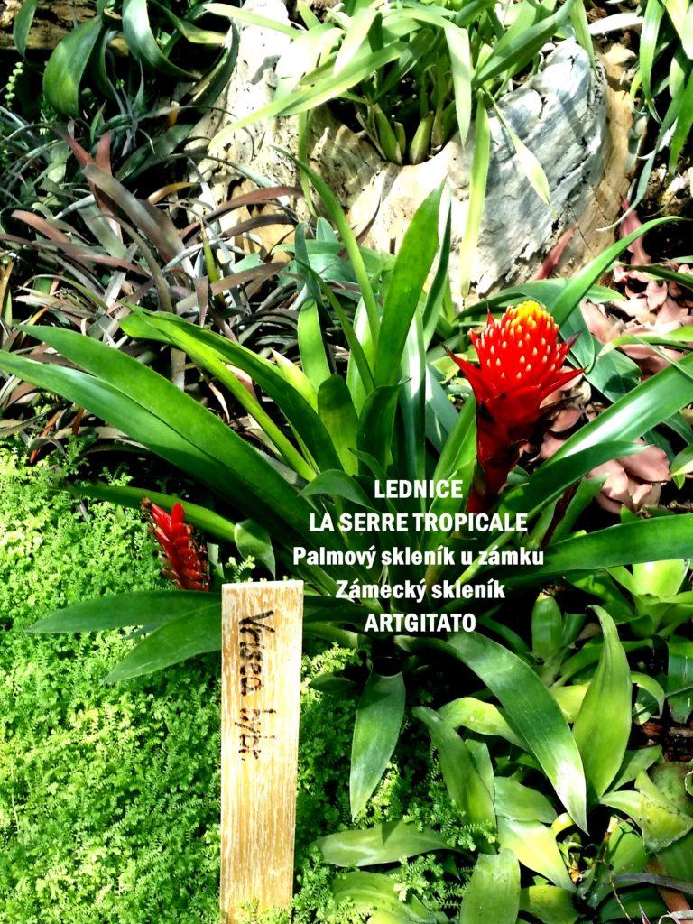 LEDNICE LA SERRE TROPICALE - Palmový skleník u zámku - Zámecký skleník Artgitato (9)