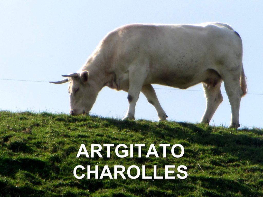Charolles Bourgogne Artgitato (17)