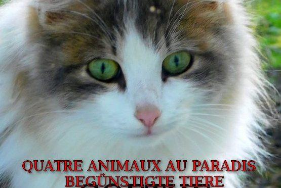 QUATRE ANIMAUX AU PARADIS – Poème de Goethe – Begünstigte Tiere